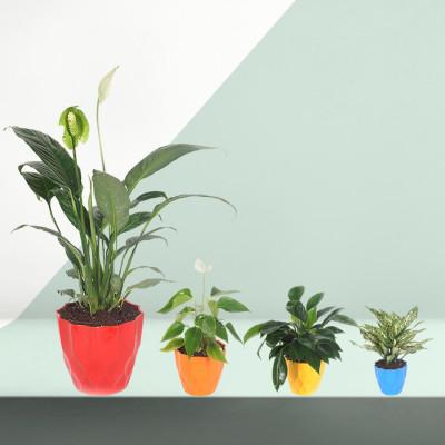 4 Best Indoor Plants Pack