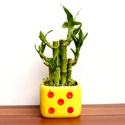 2 Layer Bamboo Plant With Dice Planter