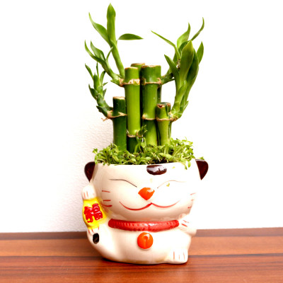 2 Layer Bamboo Plant With Cartoon Face Ceramic Planter
