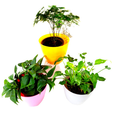 3 Best Indoor Air Purifier Plants Pack