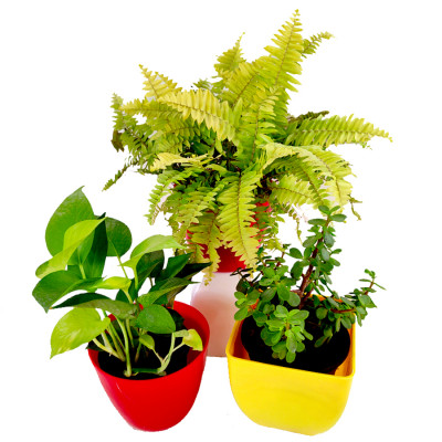 3 Best Indoor Plants to Beat the Air Pollution