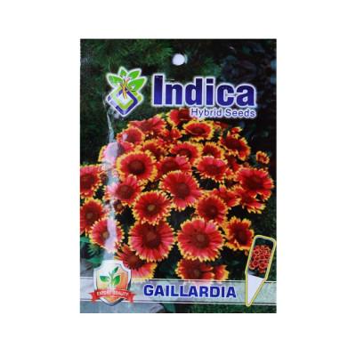 Gaillardia Flower Hybrid Seeds (pack of 5)