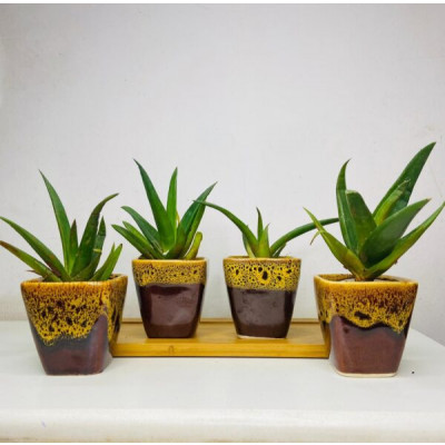 Small Tiger table top Ceremic pots (Set of 4)