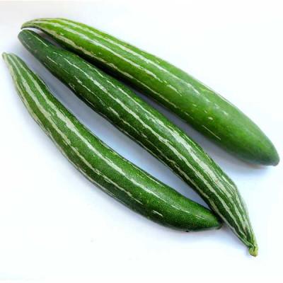 Snake Gourd Chichinda - Vegetable Seeds
