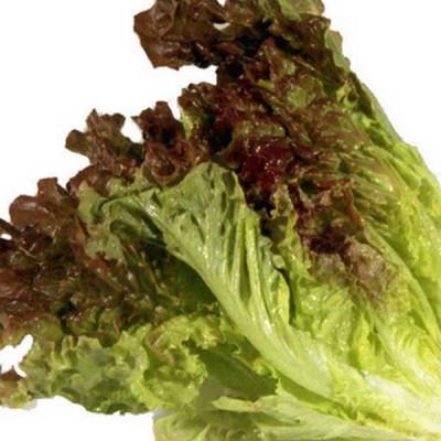 Lettuce Ivonina Batavia Vegetable Seeds