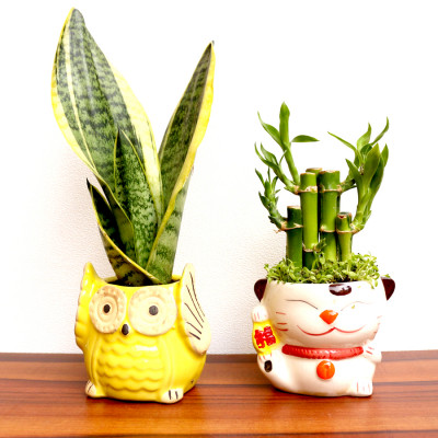 Combo Of Snake - Sanseviera Trifasciata Plant+2 Layer Bamboo plant With Ceramic Planter