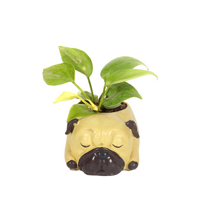 Cute speeping Dog Shaped Resin Planter with Moneyplant - Neon pothos
