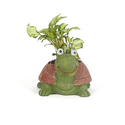 Cute Tortoise Resin Syngonium Pot