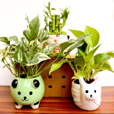 Moneyplant - Neon pothos Plants & 2 LayersBamboo Plants & Money Plant Enjoy With Ceramic Planter