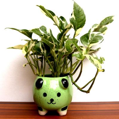 Moneyplant Enjoy Plant With Bear Face Ceramic Planter