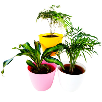Natural Air Purifier Plants for Home