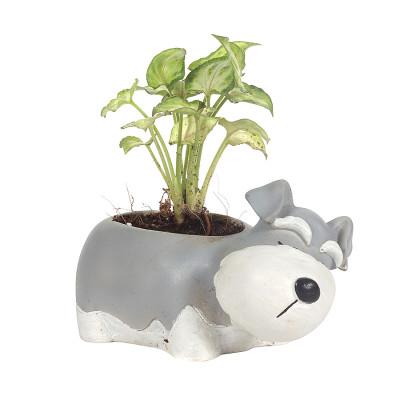 Resin Pot Dog Design Animal Planter Grey & White Color Unique & Trendy Design with Syngonium Plant