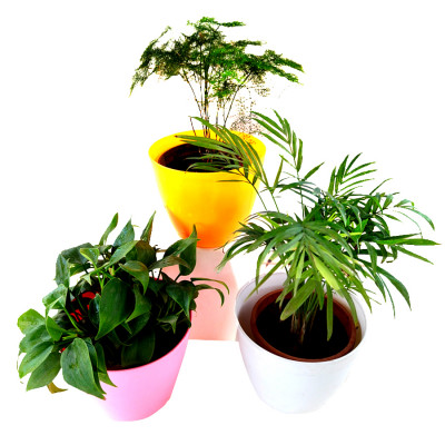 Top 3 Marvelous Air Purifier Plants for Home