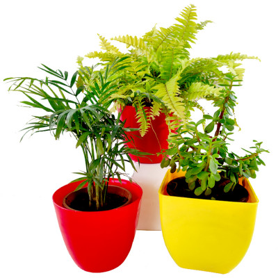 Top 3 Plants for Easy Gardening at Home