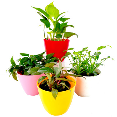 Top 4 Air Purifier and Oxygen Enriching Plant Pack