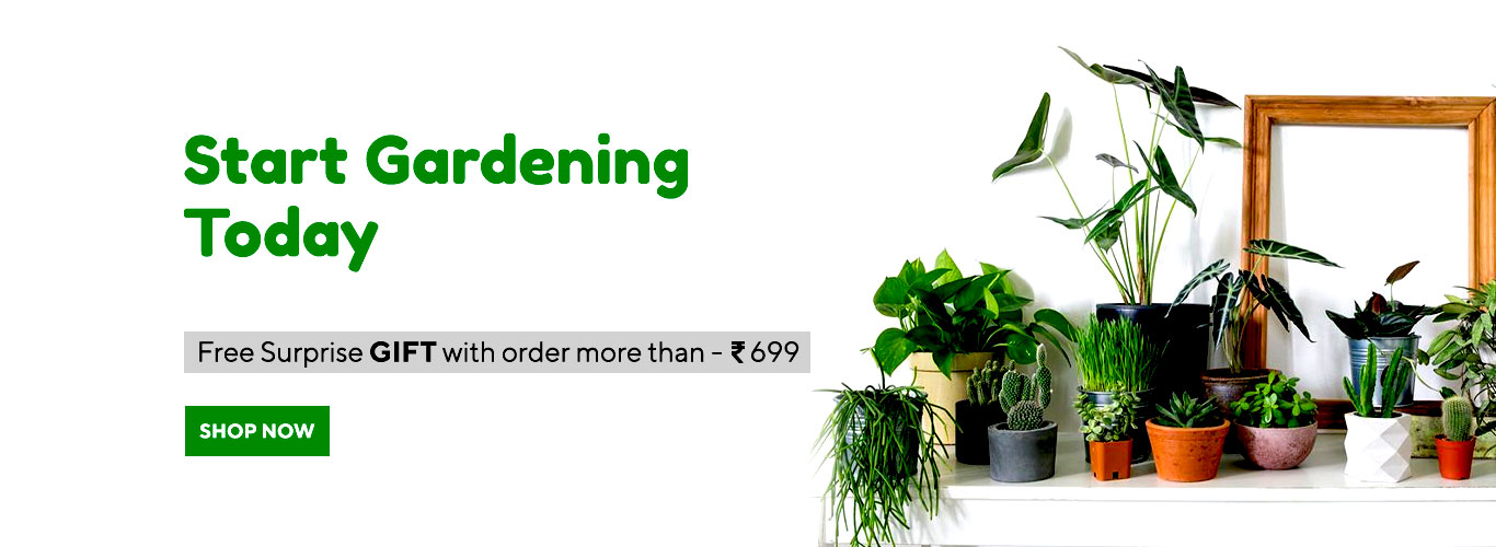 Online Plants Delivery